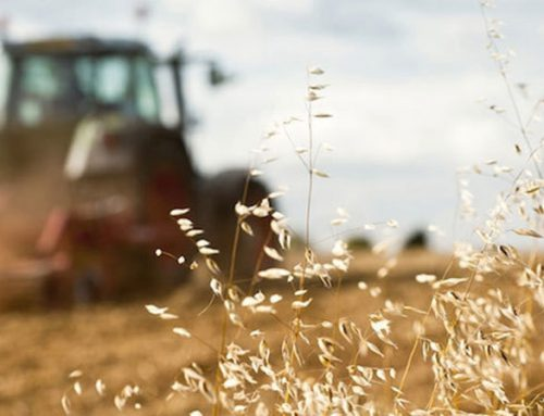 Agricultural Machines: the Italian Manufacturing Targets the Asian Markets